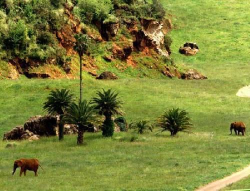 Parque Natural el Cabarceno